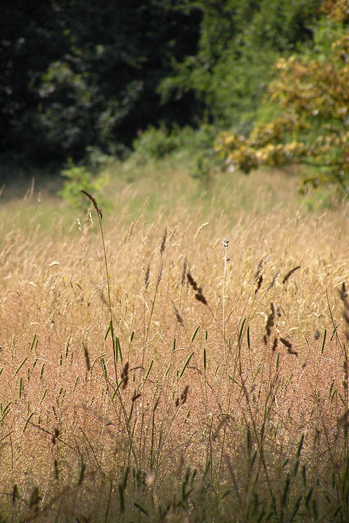 Projects-ParksPublicRealm-CCP-Grass-1050x700
