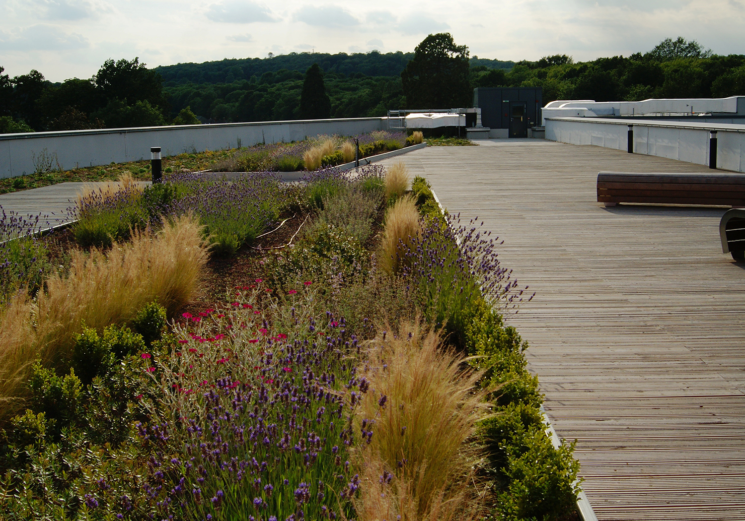 Projects-Education-EastSurreyCollege-PlantingBoards-1500x1050