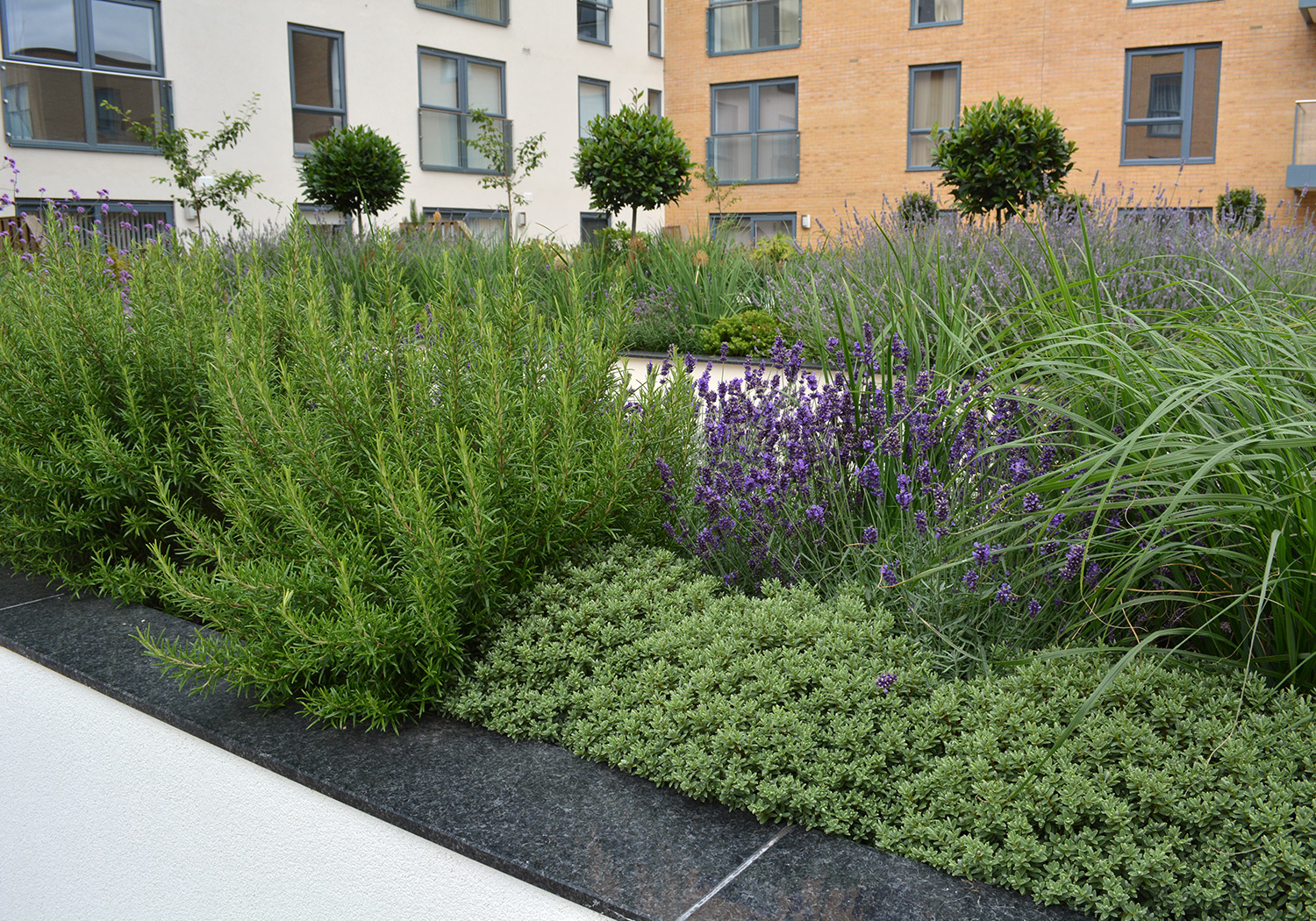 Projects-Residential-KennettIsland_Planting-1500x1050