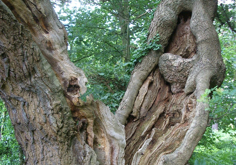 Projects-CareHospitality-WhiteleyVillage-TreePhoto-1500x1050