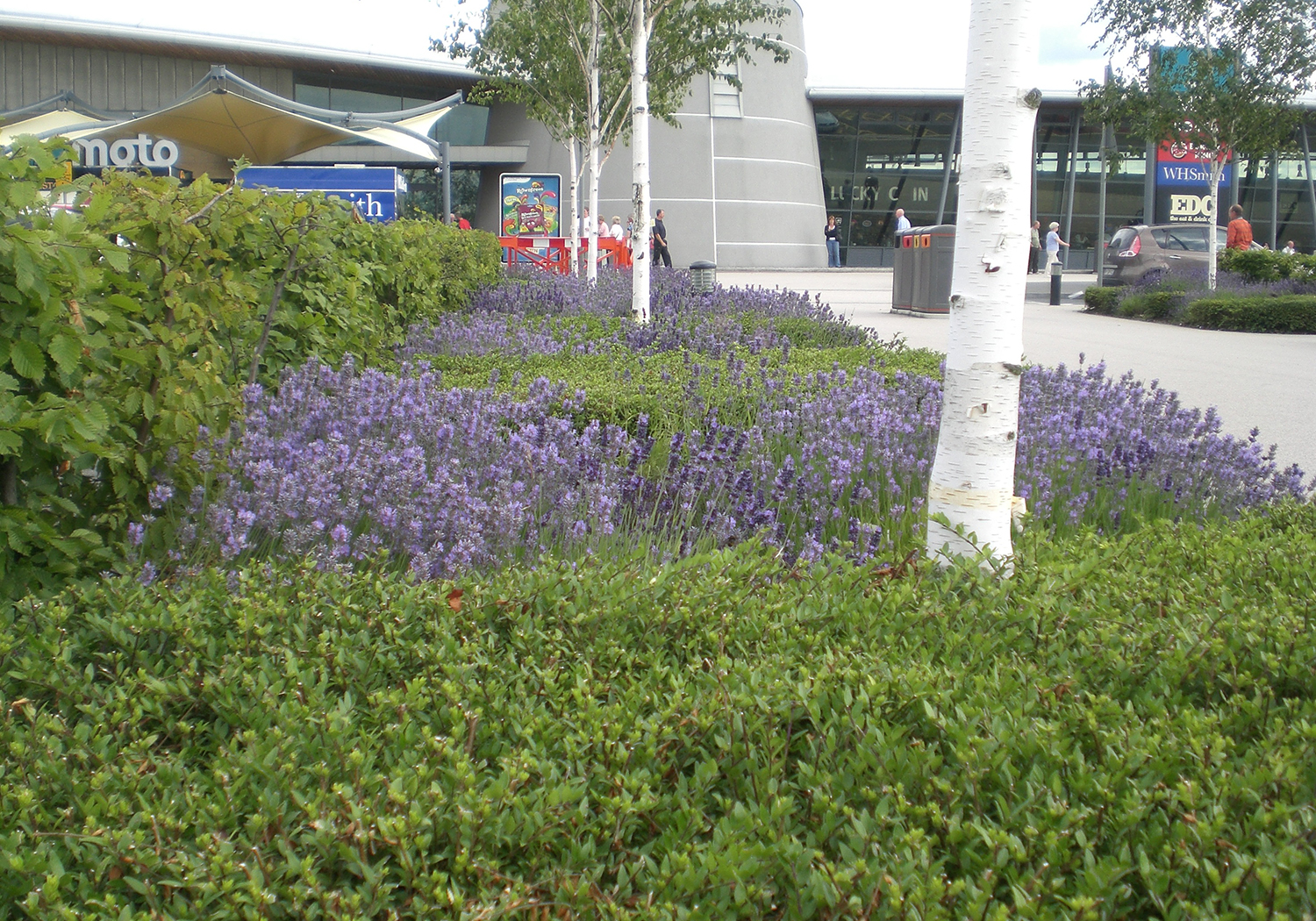 Projects-CommInd-Wetherby-Planting-1500x1050