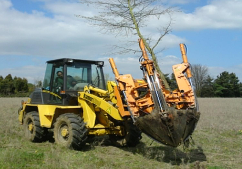 Projects-GardensEstates-HenryMoore-TreePlantation-1500x1050