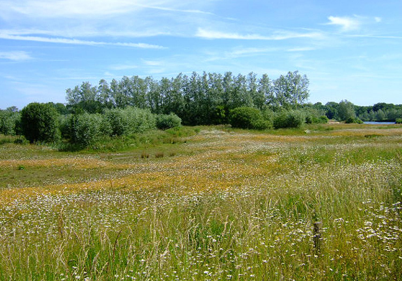 Projects-MineralsWaste-WaterMillFarm-Meadow-1500x1050