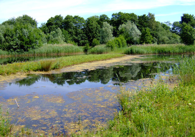 Projects-MineralsWaste-WaterMillFarm-WaterwayTrees-1500x1050