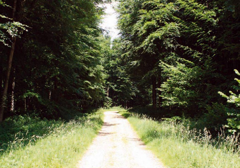 Blackwood Forest Holiday Village, Hampshire