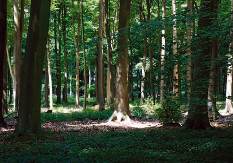 Projects-RecreationTourism-Blackwood-Woodland2-1500x1050
