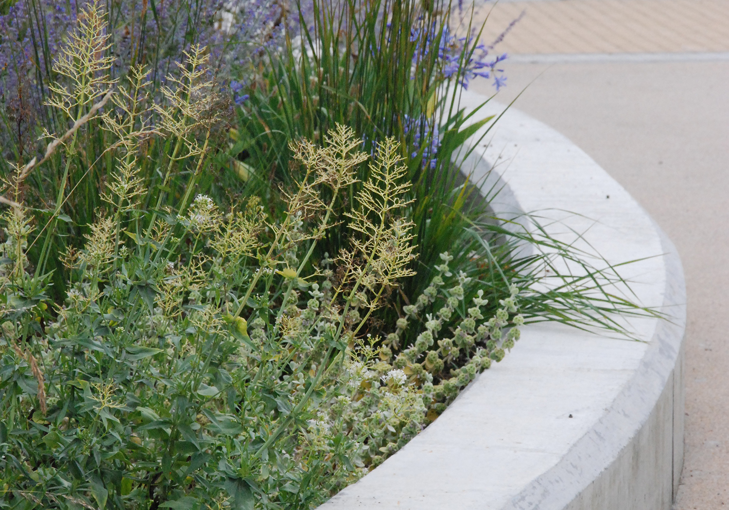 Projects-Education-Strood-ContainerPlanting-1500x1050