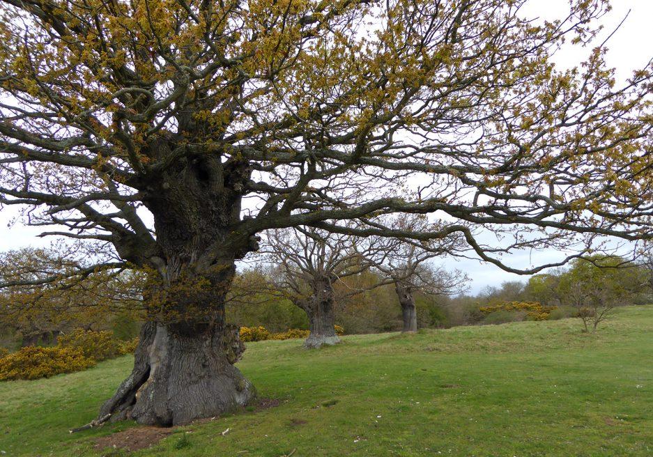 Aspal Close, Bury Saint Edmunds